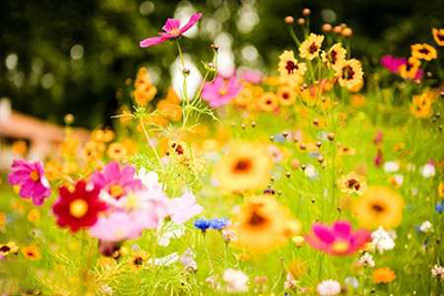 شعرهای مهدیه الهی قمشه ای , آمد بهار و فصل گل افشانی