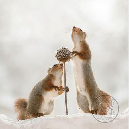 عکس های مینیمال سنجاب ها , عکس های سنجاب بامزه و زیبا