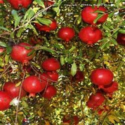 تغذیه, تغذيه مناسب, آهن, سلامت مو, میوه مفیدبرای سلامت مو, گوشت قرمز و ماهی, رشد مو, موهايی خشک, پروتئین, میوه مفید, مواد معدنی,