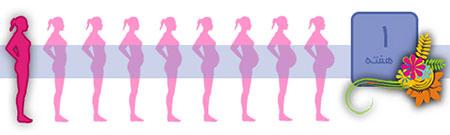 هفته اول بارداري