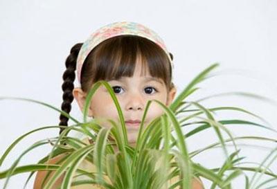 انواع گیاهان سمی,تحقیق درباره ی گیاهان سمی