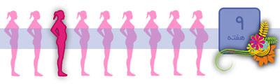 شکل جنین در هفته نهم بارداری
