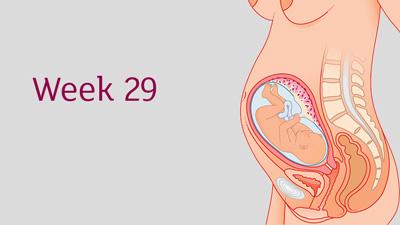 مراقبت در هفته بیست و نهم بارداری
