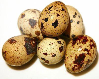 خواص تخم مرغ برای شیرخواران