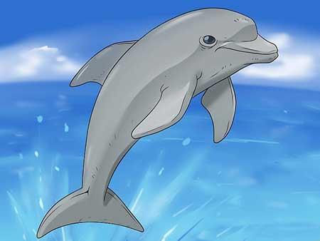 نقاشي دلفين,نحوه کشيدن نقاشي دلفين,آموزش کشيدن نقاشي دلفين