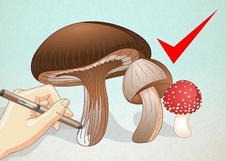 نقاشی قارچ,آموزش کشیدن نقاشی قارچ,آمورش گام به گام کشیدن قارچ