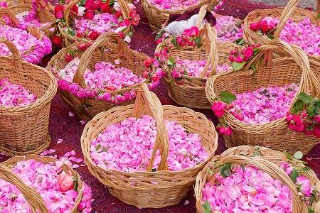گلاب برای کودکان, مضرات گلاب برای کودکان, خواص گلاب برای کودکان