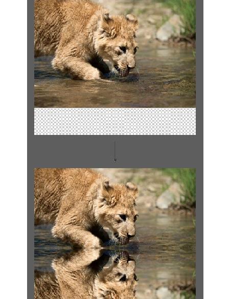قرینه شدن تصویر در فتوشاپ, ساخت تصویر آینه ای در فتوشاپ, ایجاد تصویر آینه ای در فتوشاپ