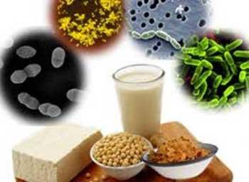 طرز تهیه ماست پروبیوتیک , فرآورده های پروبیوتیکی