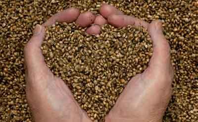 5 دانهی سالمی که هر روز باید مصرف کنید