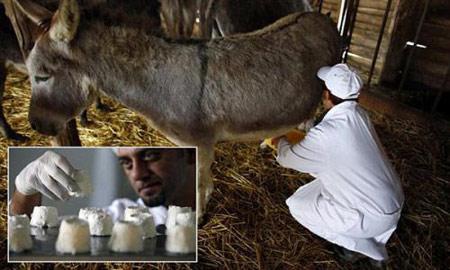 مقوی ترین شیر,خواص بهترین شیر
