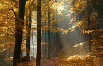 شعر زیبای شهریار درباره پاییز