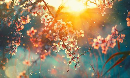 شعر در وصف بهار,شعر سال نو