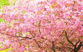 اشعار فریدون مشیری, شعر نوروز, شعر تبریک بهار