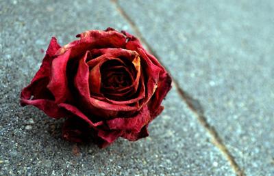 گل خشکیده / فریدون مشیری