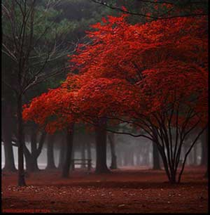 رد پایی در مه