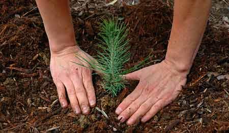 تحقیق در مورد روز درختکاری