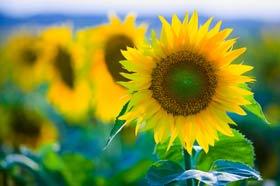 شعر تابستان,شعرتابستان,تابستان شعر