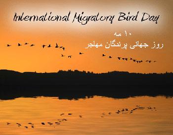 10 مه؛ روز جهانی پرندگان مهاجر