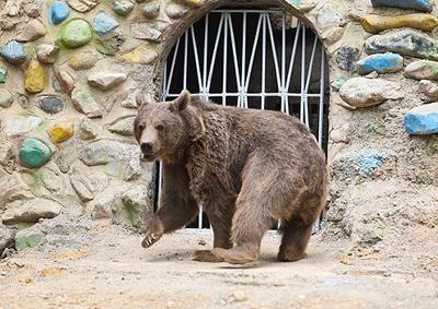 باغ وحش, باغ وحش ناصری, اولین باغ وحش در تهران