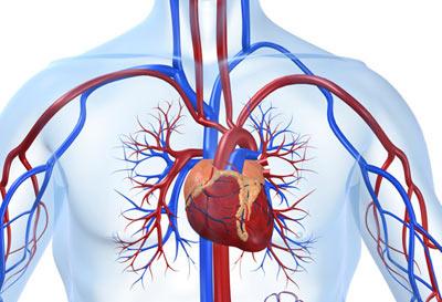 پیشگیری از بیماریهای قلبی,29 سپتامبر روز جهانی قلب,7 مهر روز جهانی قلب