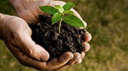 هفته منابع طبیعی در ایران,هفته منابع طبیعی,روز درخت کاری