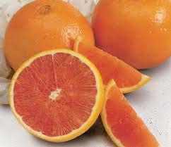 دسر مربای پرتقالی طرز تهیه و آموزش درست کردن