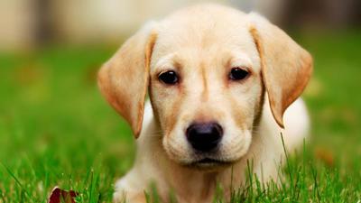 طالع بینی زن متولد سال سگ, طالع بینی سال سگ