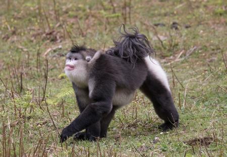 حیوانات عجیب و غریب, تصاویر حیوانات عجیب
