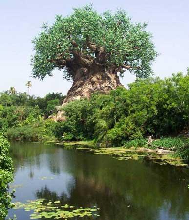 درخت شگفت انگيز