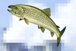 ماهی از سرگنده گردد نی زدم