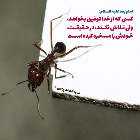 ع نوشته های جالب , جمل های زیب