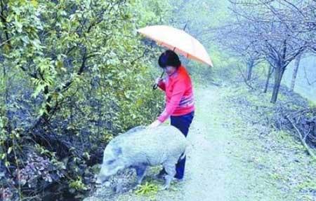 زندگی زن تایلندی باعقرب وزن چینی با گراز!!+ عکس