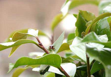 مهندسی, طبیعت, حشرات