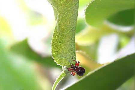 مهندسی, طبیعت, حشرات,www.tudartu.ir
