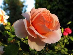 با یه گل بهار نمیشه, رئیس سازمان, ضرب المثل جدید, با یک گل بهار نمی شه