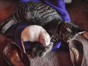 پیرزن, موش و گربه, داستان ضرب المثل