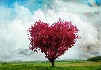 راز عشق, شریک زندگی, رازهای عشق و عاشقی