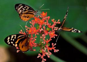 پروانه, دوران کودکی, پوسته تخم مرغ