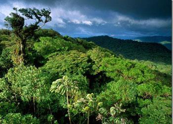 جنگل مولا, داستان ضرب المثل, ریشه ضرب المثل
