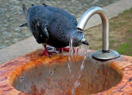 عکس حیوانات بامزه, عکس حیوانات, مطالب طنز و خنده دار