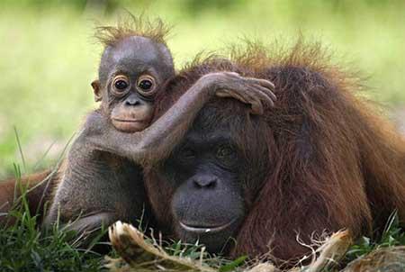 عکس های بامزه از حیوانات, عکس حیوانات