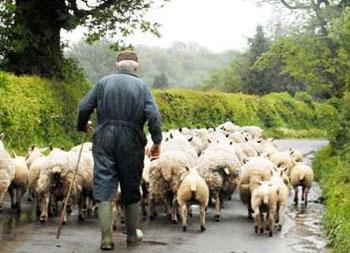 معماي جالب،معماي جذاب،معماي دهقان و گوسفندان