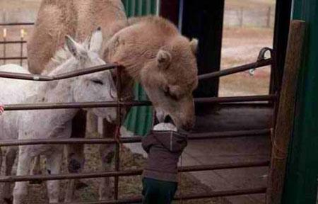 عکس خنده دار حیوانات, عکس سوتی های خنده دار