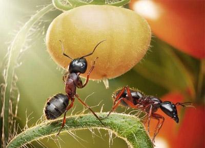 مثبت اندیش, زندگی مورچه ها