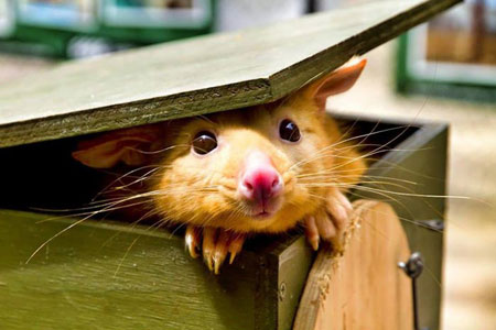 عکس های خنده دار , حیوانات بامزه