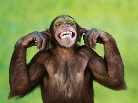 عکس خنده دار حیوانات, کاریکاتور حیوانات