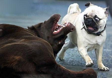 عکس حیوانات, عکس های خنده دار از حیوانات