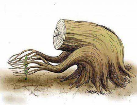 تبریک روز درختکاری , کاریکاتور و تصاویر طنز