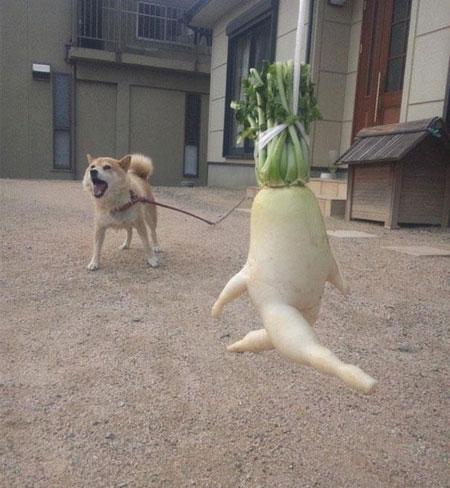 عکس میوه های بی ادب, عکس های خنده دار در مورد میوه